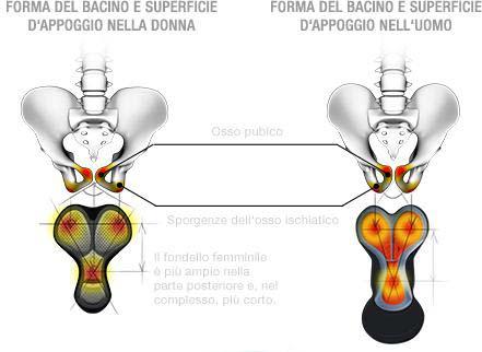 Superticie appoggio ossa ischiatiche